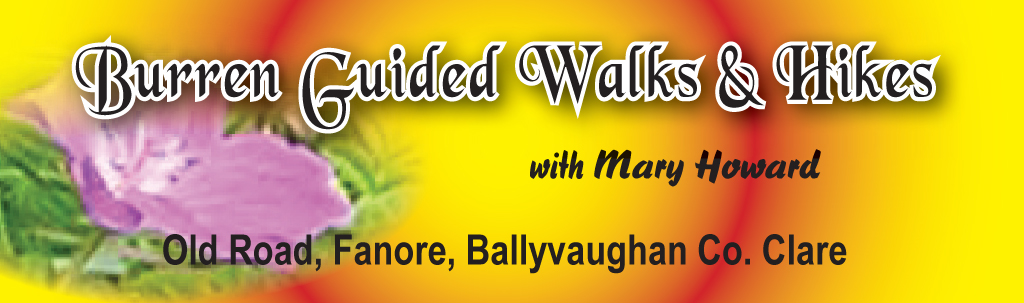Burren Guided Walks & Hikes